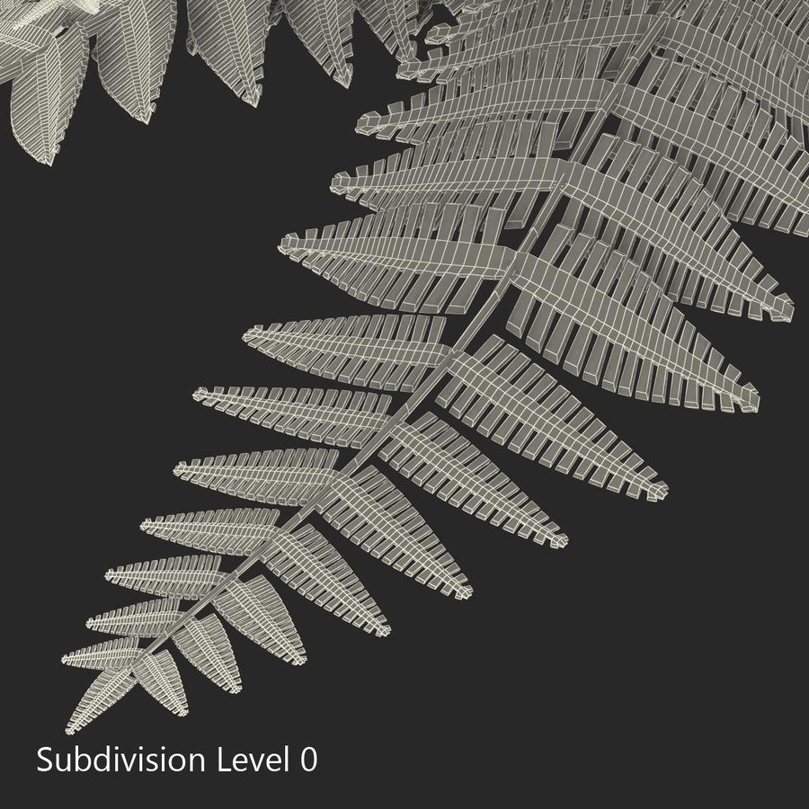 Fern royalty-free 3d model - Preview no. 9