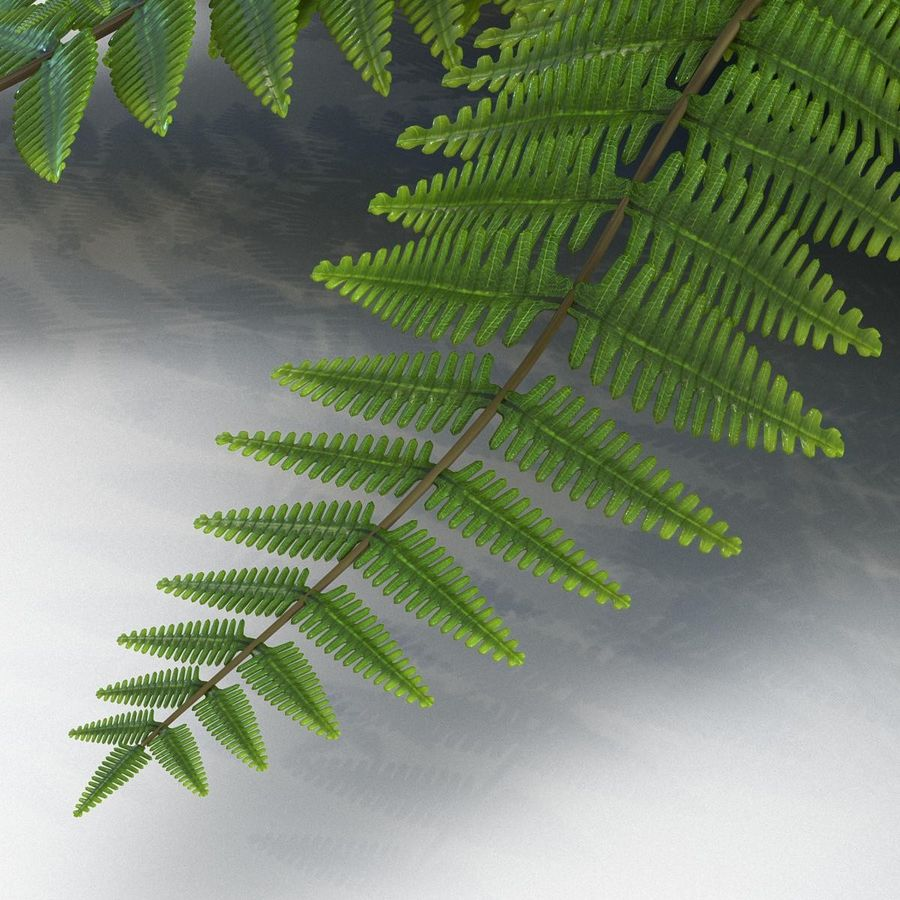 Fern royalty-free 3d model - Preview no. 8