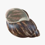 Marginata Shell 2 3d model