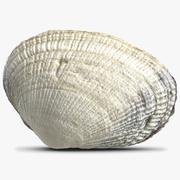 Sea Shell 9 modelo 3d