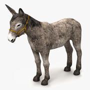 Donkey Gray 3d model