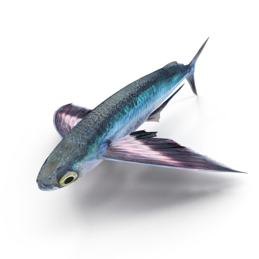 Flying Fish royalty-free 3d model - Preview no. 6