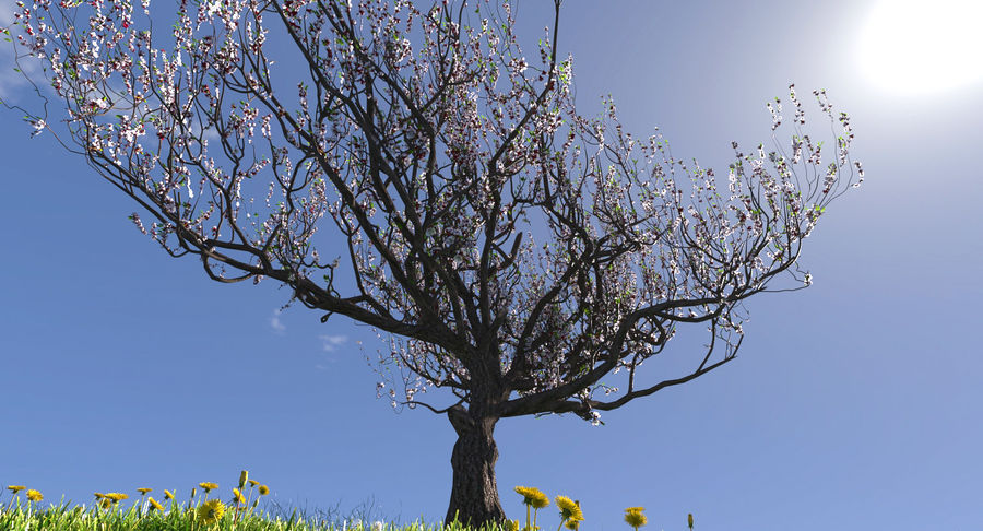 Apricot Blossoms royalty-free 3d model - Preview no. 2