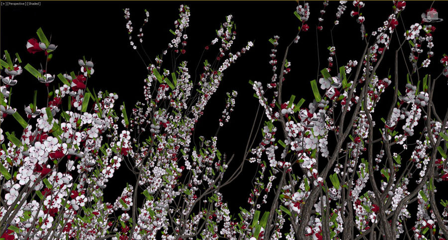 Apricot Blossoms royalty-free 3d model - Preview no. 12