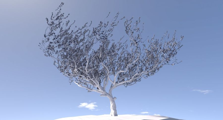Apricot Blossoms royalty-free 3d model - Preview no. 6