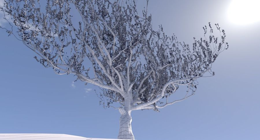 Apricot Blossoms royalty-free 3d model - Preview no. 5