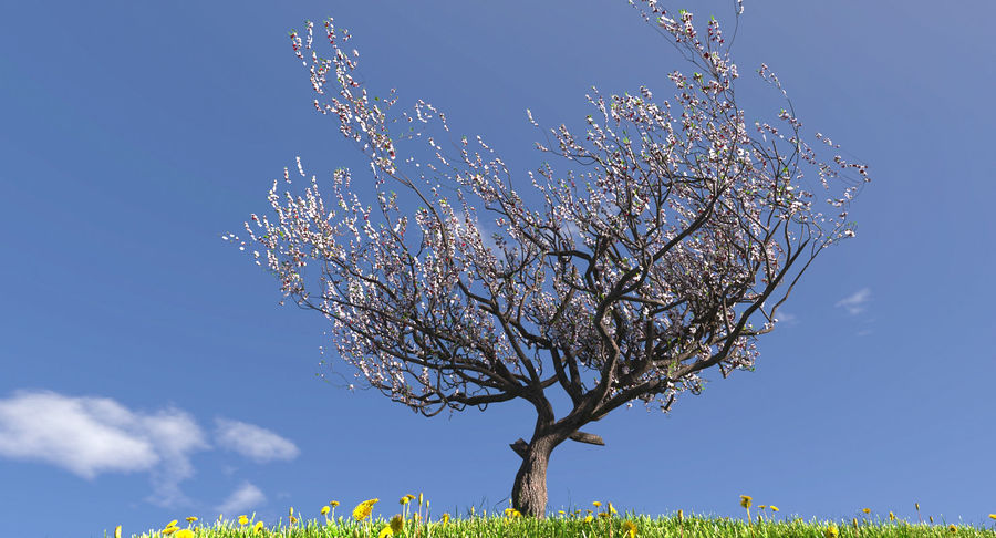 Apricot Blossoms royalty-free 3d model - Preview no. 1