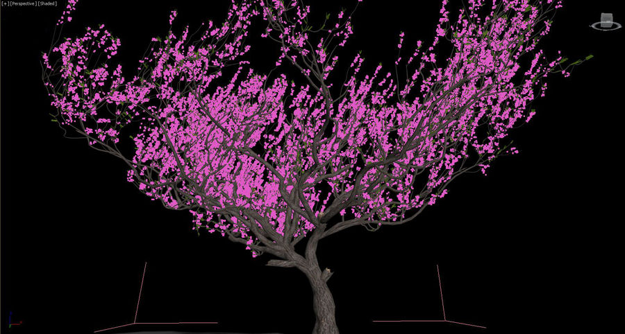 Apricot Blossoms royalty-free 3d model - Preview no. 11