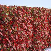 秋の茂みセット2 3d model