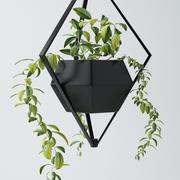 観葉植物 3d model