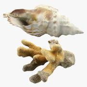 Concha y coral modelo 3d