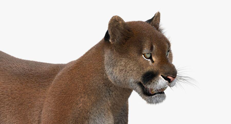 Cougar (Fur) royalty-free 3d model - Preview no. 12