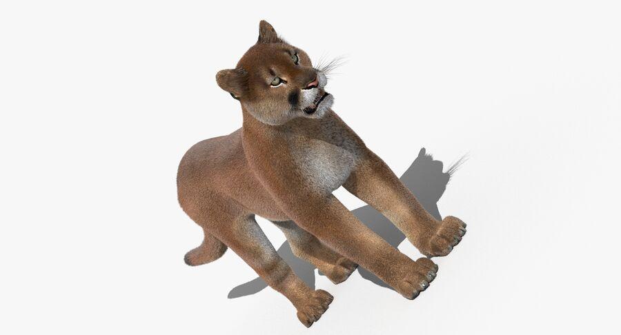 Cougar (Fur) royalty-free 3d model - Preview no. 5