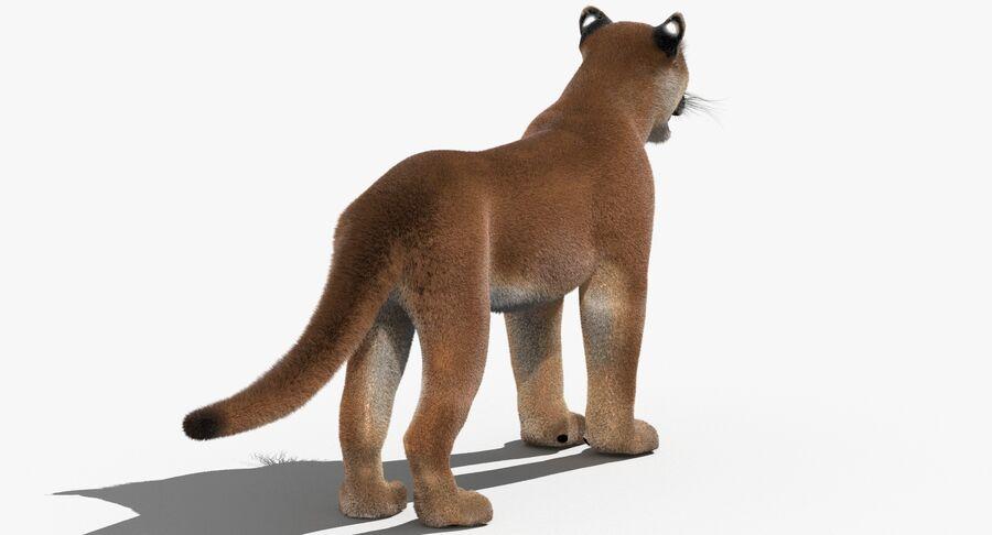 Cougar (Fur) royalty-free 3d model - Preview no. 8