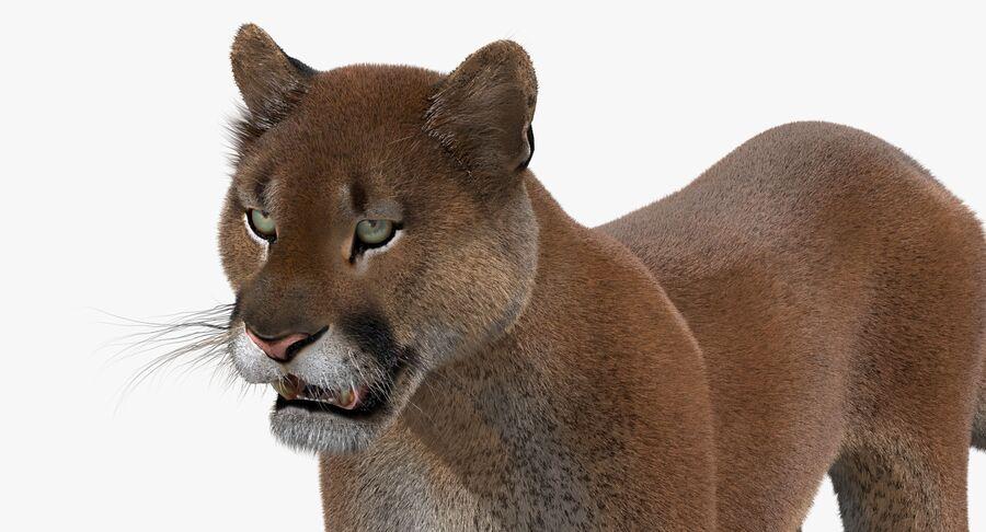 Cougar (Fur) royalty-free 3d model - Preview no. 10