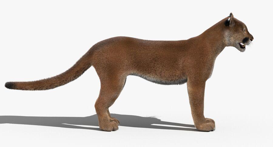 Cougar (Fur) royalty-free 3d model - Preview no. 7