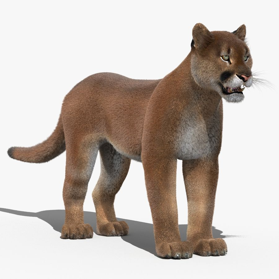 Cougar (Fur) royalty-free 3d model - Preview no. 1