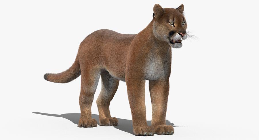 Cougar (Fur) royalty-free 3d model - Preview no. 2