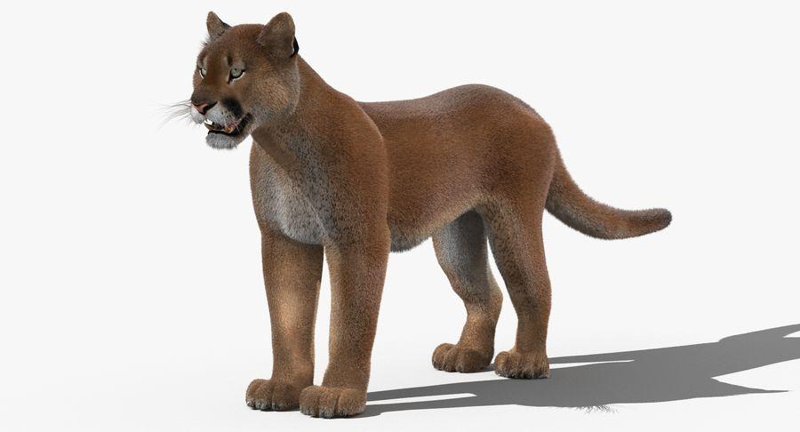 Cougar (Fur) royalty-free 3d model - Preview no. 4