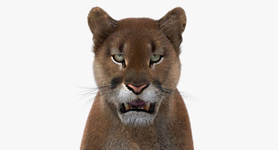 Cougar (Fur) royalty-free 3d model - Preview no. 13