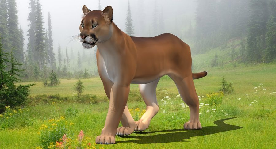 Cougar (Animated, Cartoon) royalty-free 3d model - Preview no. 3