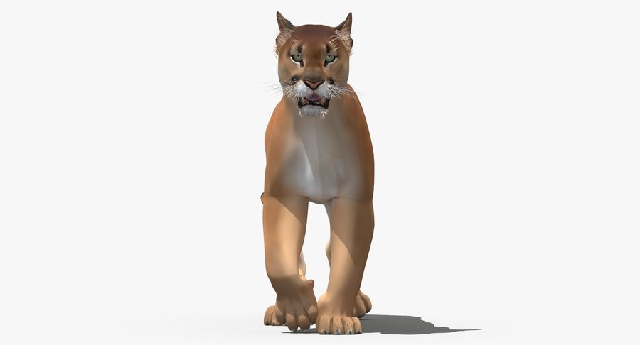 Cougar (Animated, Cartoon) royalty-free 3d model - Preview no. 6