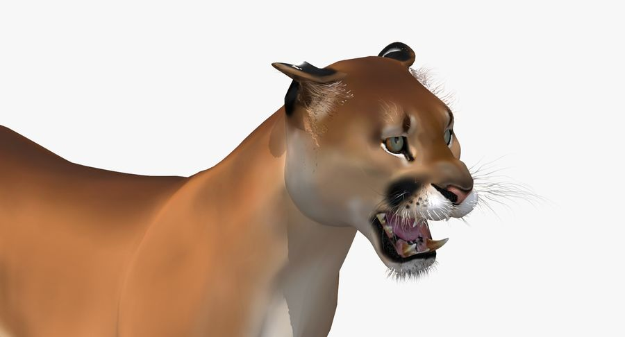 Cougar (Animated, Cartoon) royalty-free 3d model - Preview no. 13