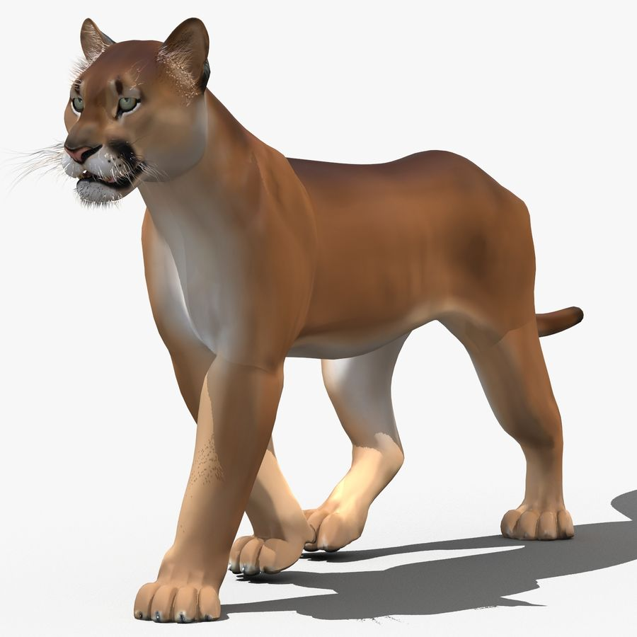 Cougar (Animated, Cartoon) royalty-free 3d model - Preview no. 1