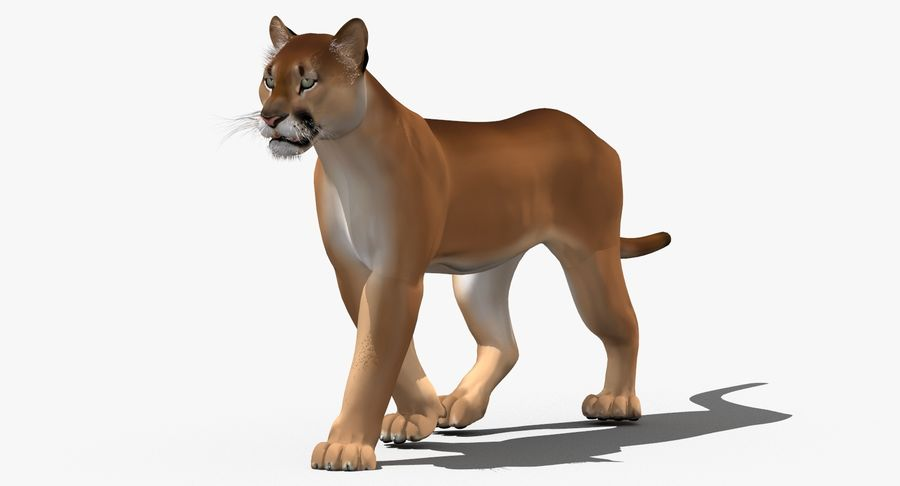 Cougar (Animated, Cartoon) royalty-free 3d model - Preview no. 2