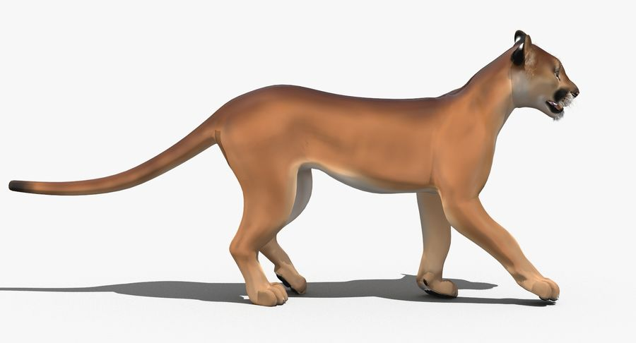 Cougar (Animated, Cartoon) royalty-free 3d model - Preview no. 8