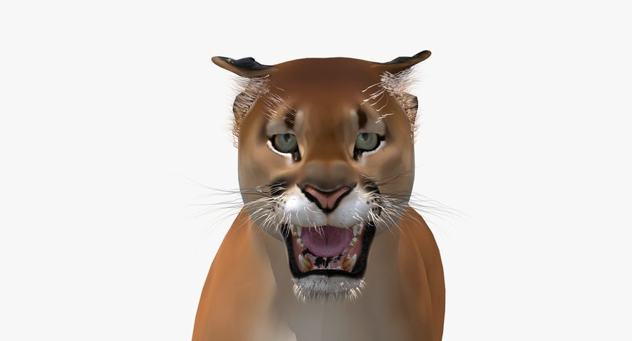 Cougar (Animated, Cartoon) royalty-free 3d model - Preview no. 14
