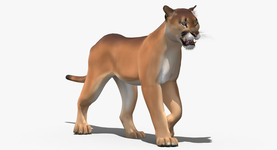 Cougar (Animated, Cartoon) royalty-free 3d model - Preview no. 4