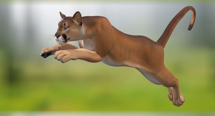 Cougar (Animated, Cartoon) royalty-free 3d model - Preview no. 5