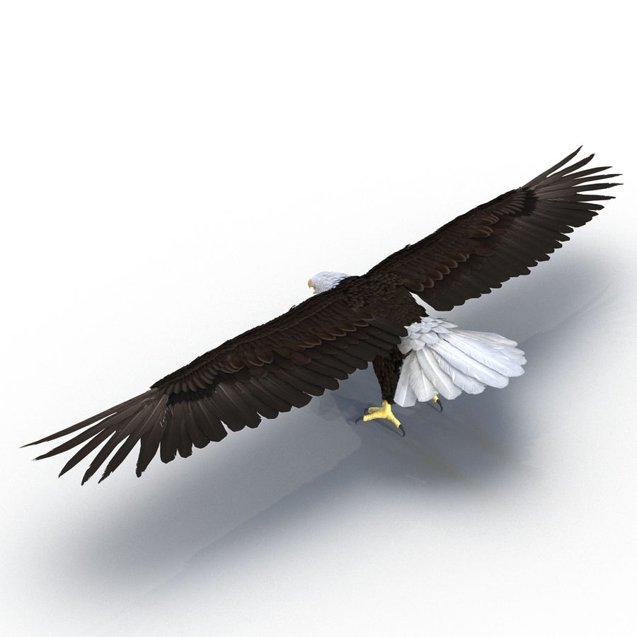Águila calva royalty-free modelo 3d - Preview no. 5