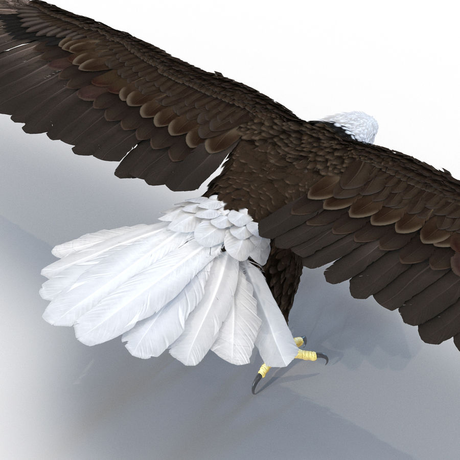 Águila calva royalty-free modelo 3d - Preview no. 12