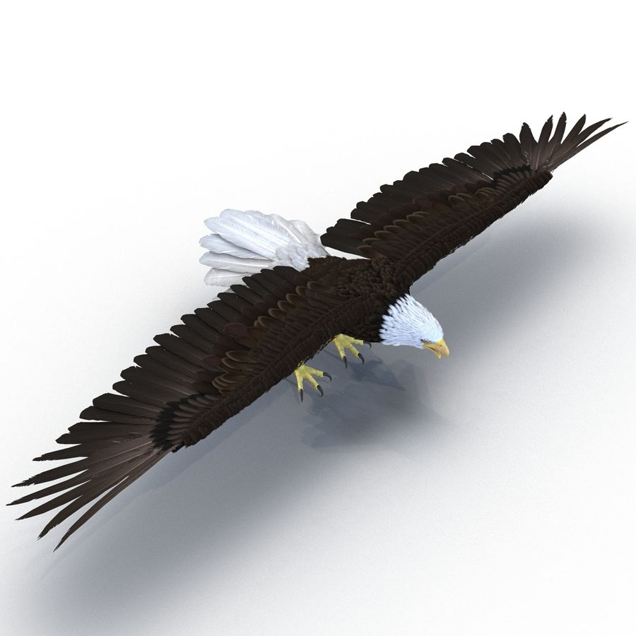 Águila calva royalty-free modelo 3d - Preview no. 4