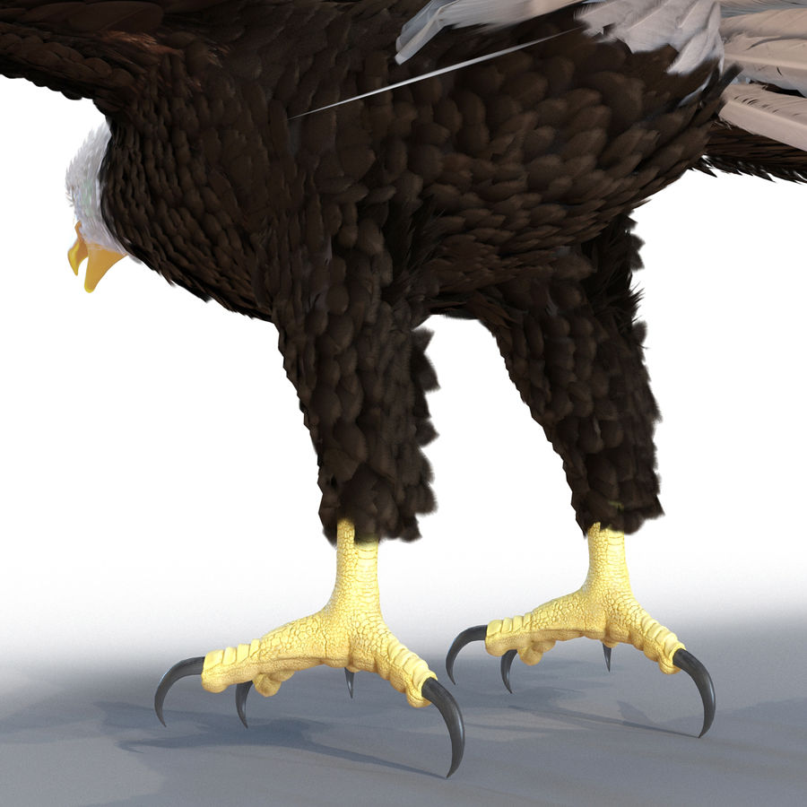 Águila calva royalty-free modelo 3d - Preview no. 17