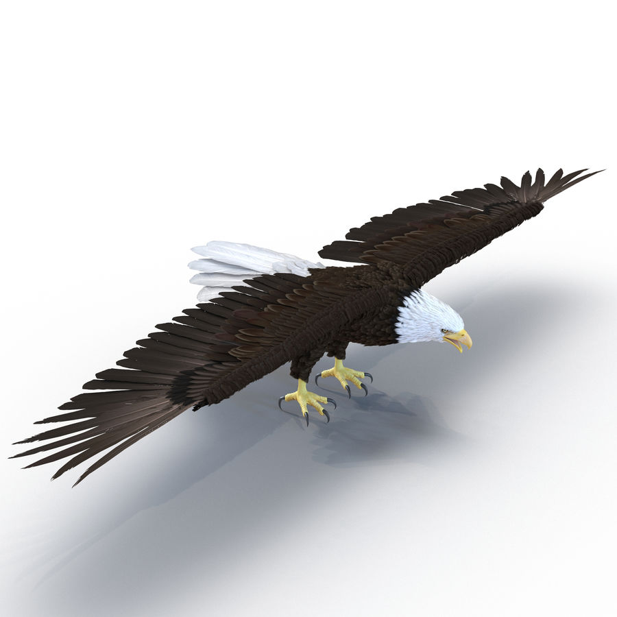 Águila calva royalty-free modelo 3d - Preview no. 2