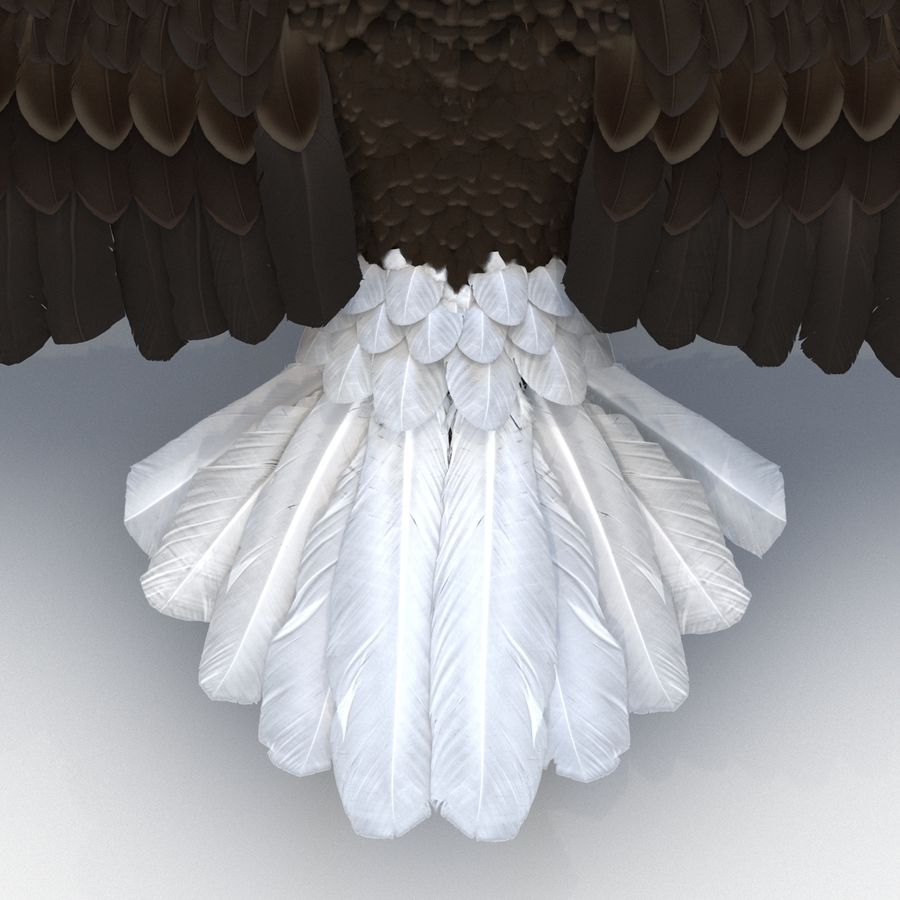 Águila calva royalty-free modelo 3d - Preview no. 19
