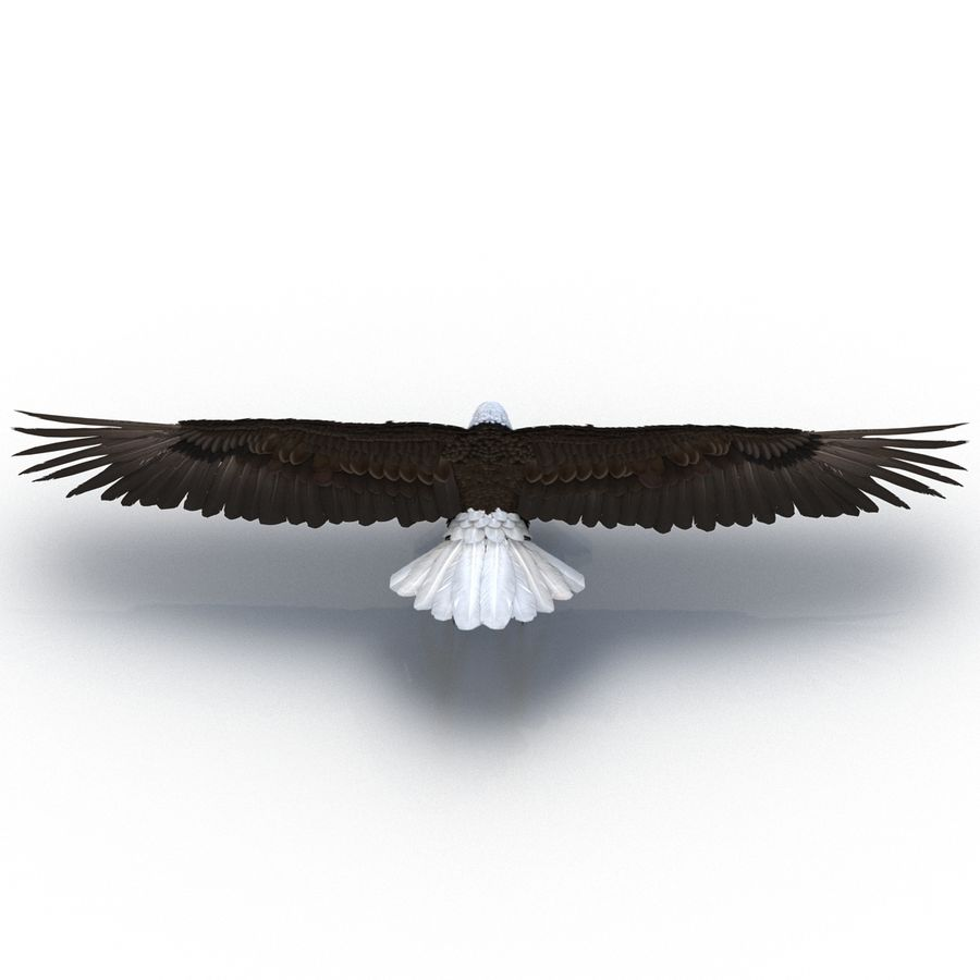 Águila calva royalty-free modelo 3d - Preview no. 8