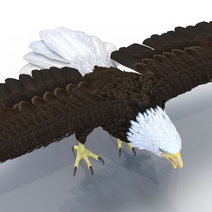 Águila calva royalty-free modelo 3d - Preview no. 11