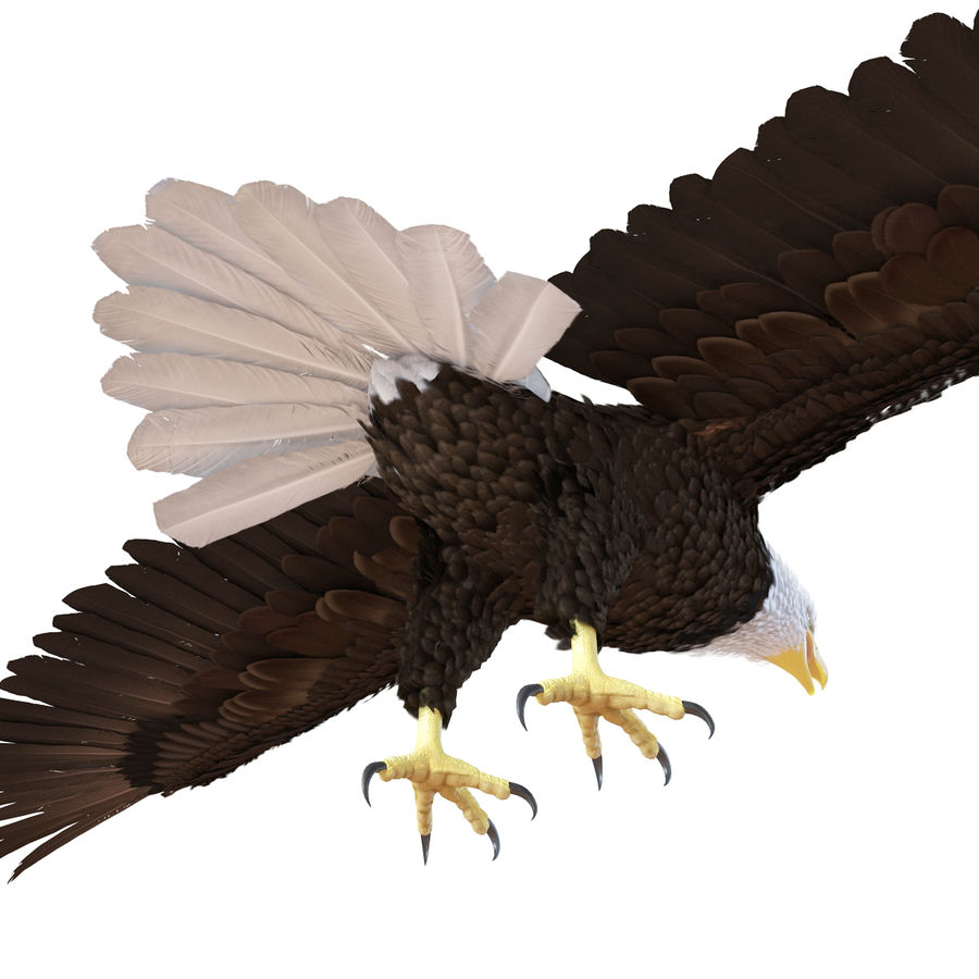 Águila calva royalty-free modelo 3d - Preview no. 13
