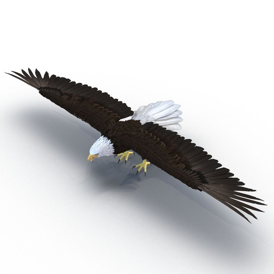 Águila calva royalty-free modelo 3d - Preview no. 3