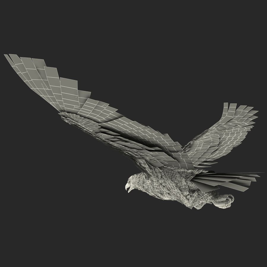 Bald Eagle Pose 4 royalty-free 3d model - Preview no. 26