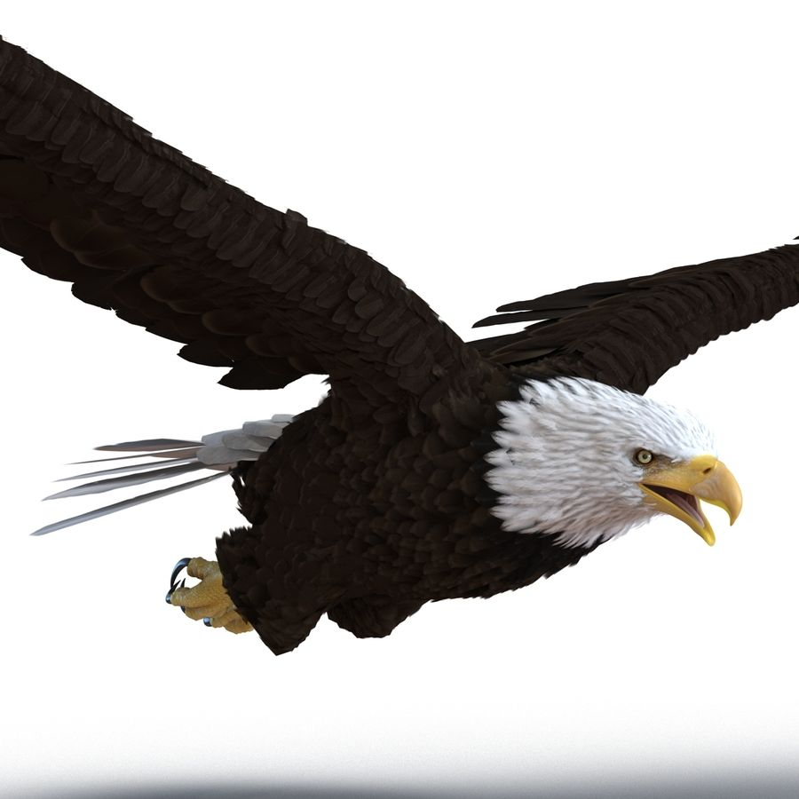 Bald Eagle Pose 4 royalty-free 3d model - Preview no. 9