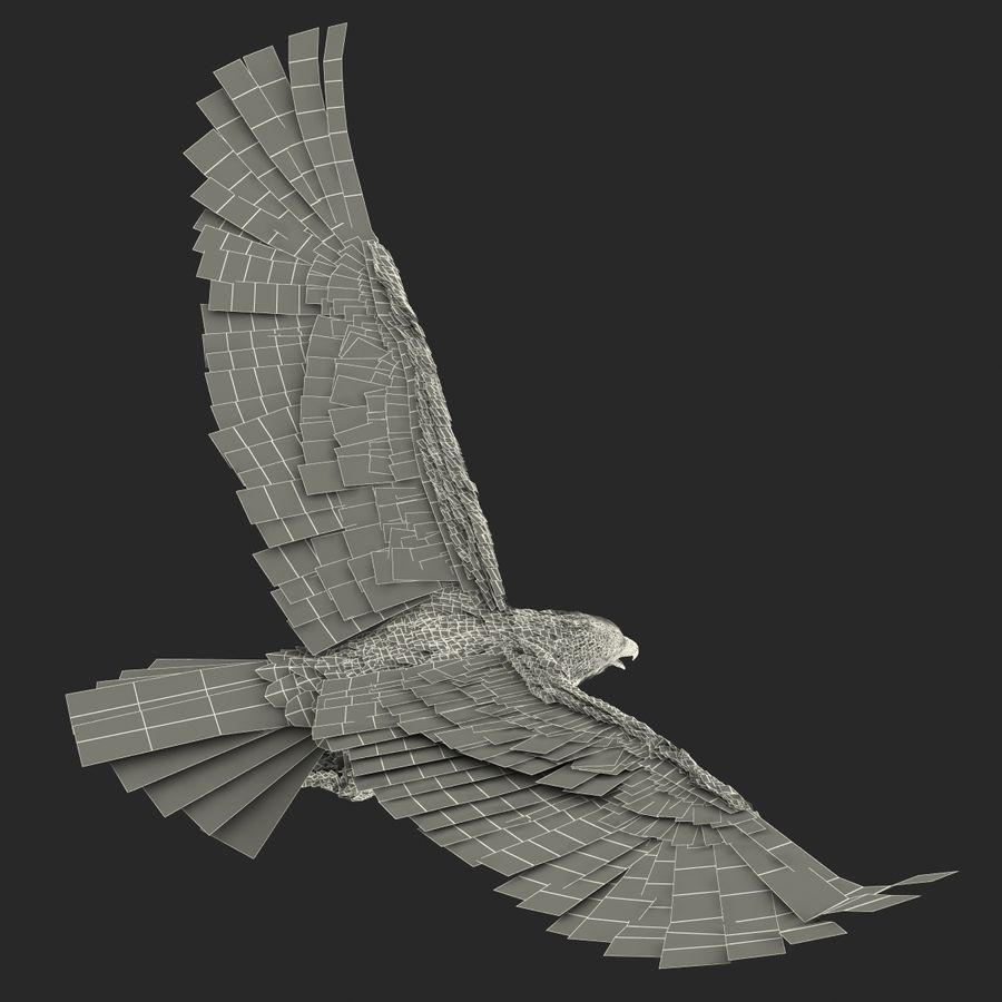 Bald Eagle Pose 4 royalty-free 3d model - Preview no. 27