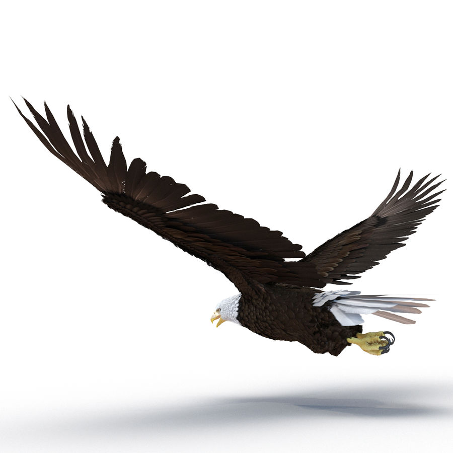 Bald Eagle Pose 4 royalty-free 3d model - Preview no. 3