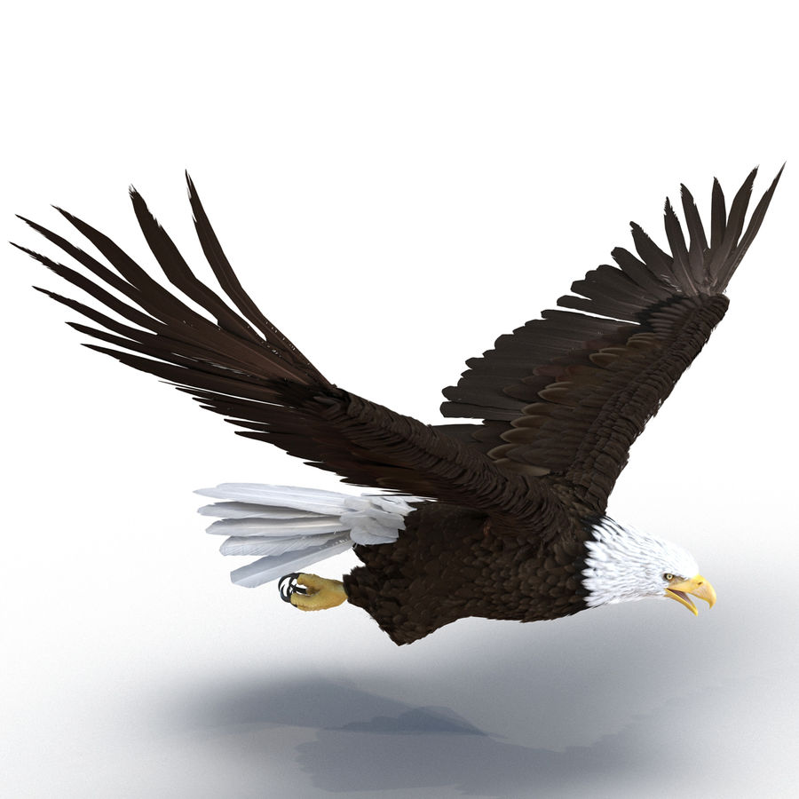 Bald Eagle Pose 4 royalty-free 3d model - Preview no. 4