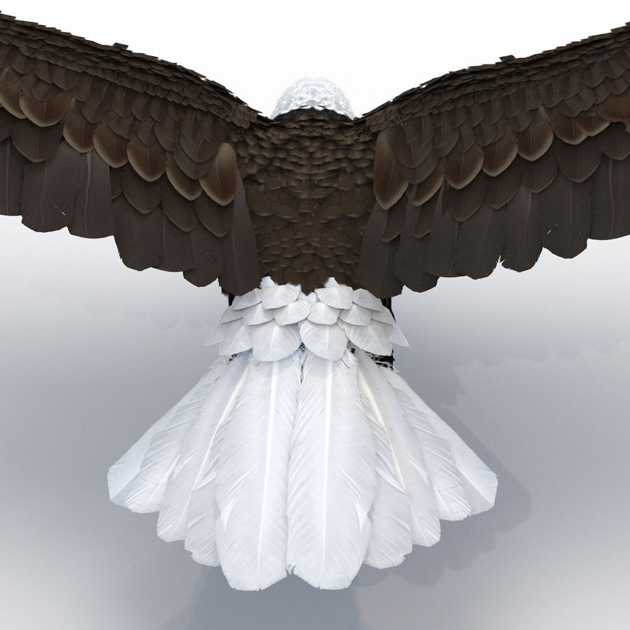 Bald Eagle Pose 4 royalty-free 3d model - Preview no. 18