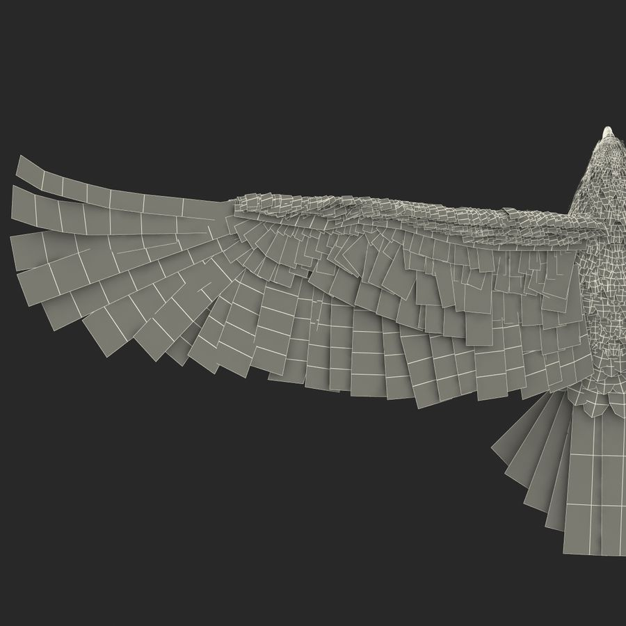 Bald Eagle Pose 4 royalty-free 3d model - Preview no. 33